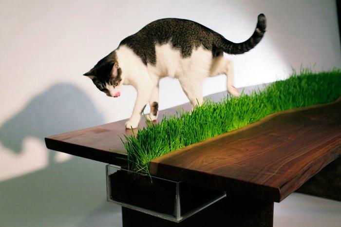 很有綠意的桌子
