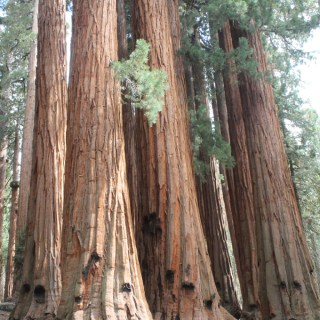 Kings Canyon & Sequoia National Park Recommendations