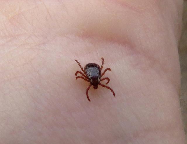 Ticks in Florida Florida Hikes!