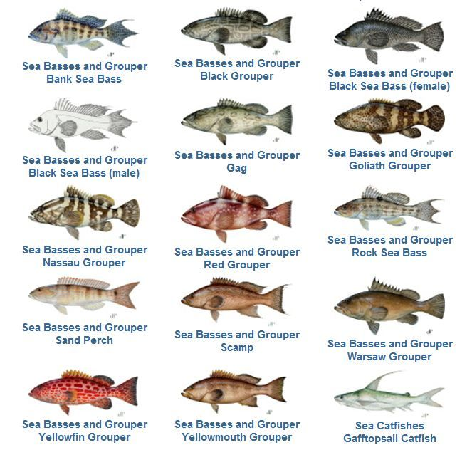 Grouper Fishing Reopens May 1 in The Florida Keys