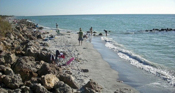 Beachcombers hunt shark's teeth and shells on Casperson Beach in Venice