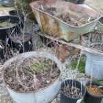 Rustic Container Gardening
