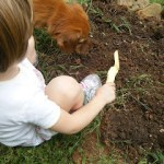 Growing Cabbage and Kids