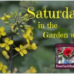 Join us for Saturdays in the Garden