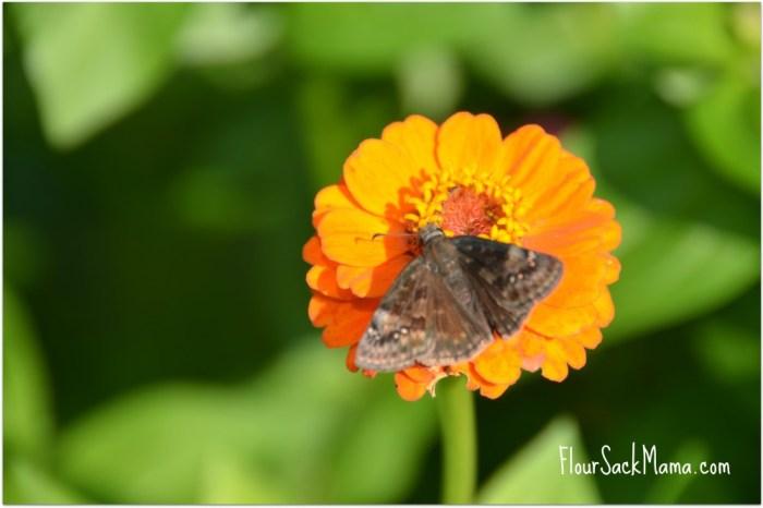 Butterfly on Zinnia Flour Sack Mama
