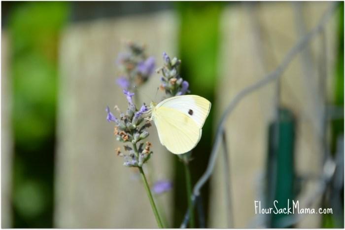 Cream Butterfly on Lavender Flour Sack Mama