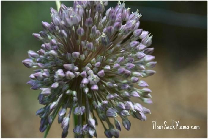 Garlic Scape Floret Flour Sack Mama