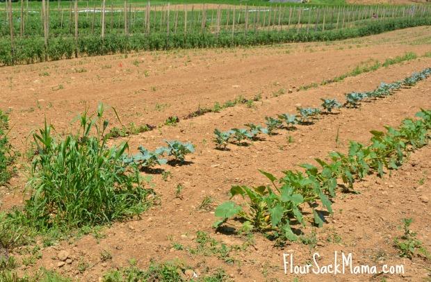 Crops Rodale Hospital Farm