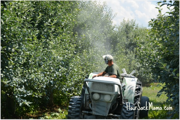 Spray Kaolin Clay on Apple Orchard