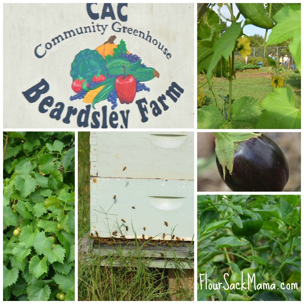 Beardsley Farm Collage
