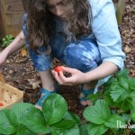 Grow Your Own Organic Strawberries