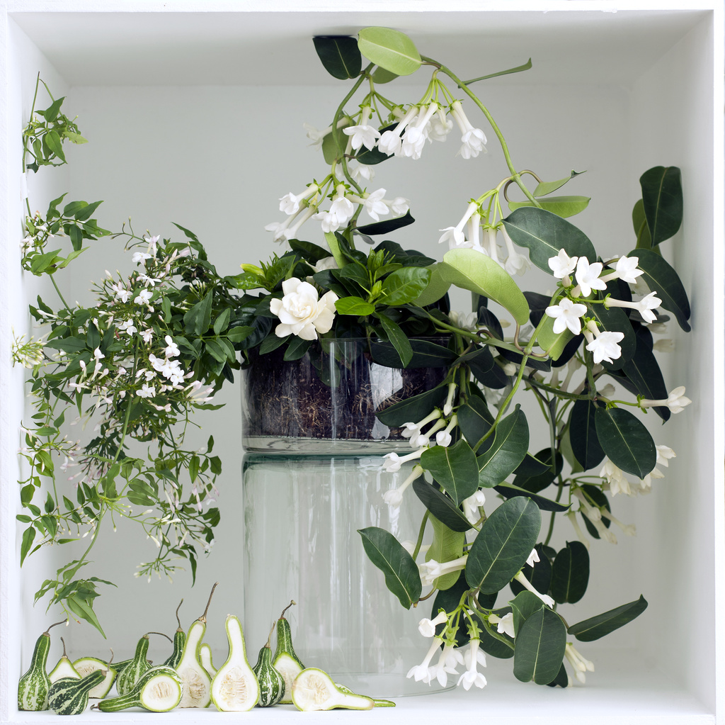 Zimmer Kletterpflanze March 2016 White Fragrant Plants Are Houseplants Of The