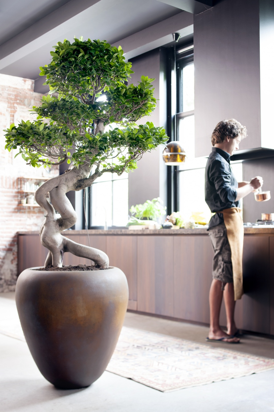 Ficus Ginseng Bonsai July 2015 The Ficus Ginseng Is Houseplant Of The Month Flower