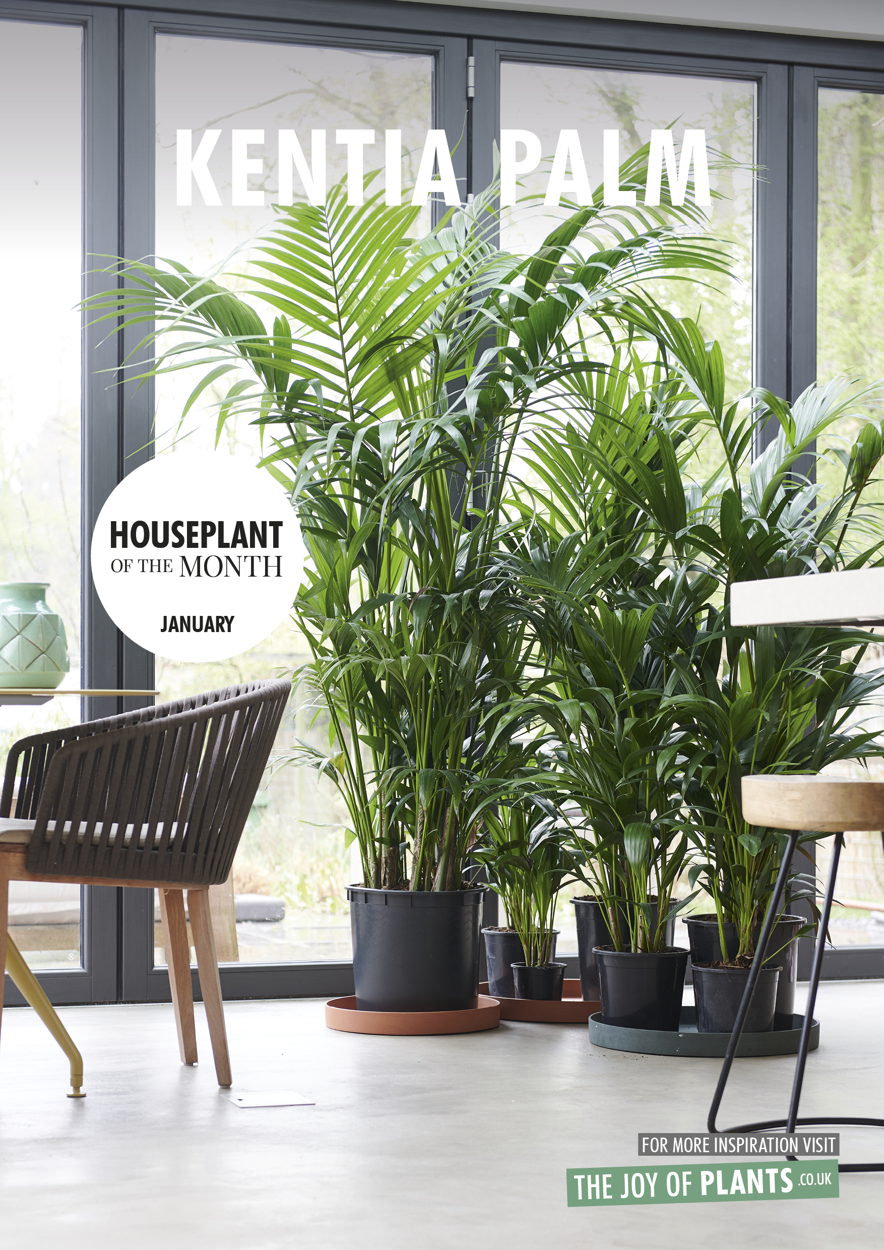 Topfpflanze Palme January 2019 Kentia Palm Houseplant Of The Month Flower Council