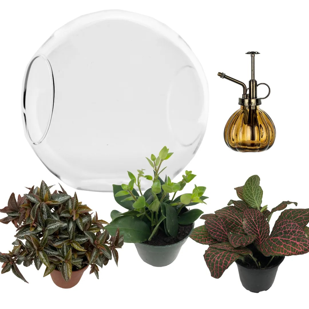 Diy Kit Large Humid Glass Terrarium With Mister