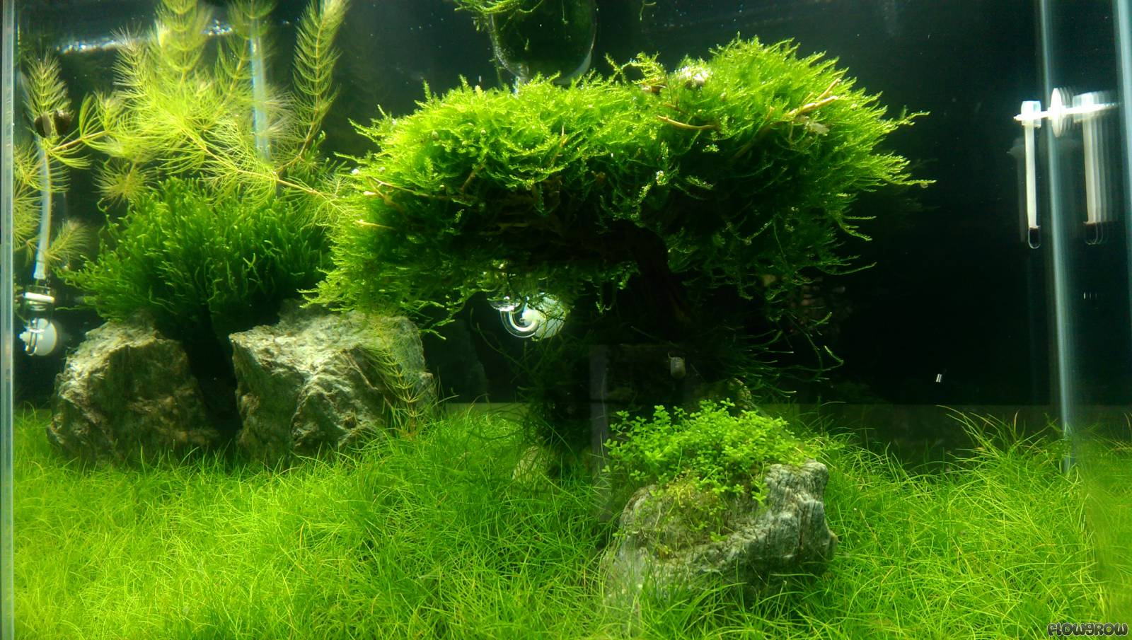 Fluval Edge Beleuchtung Big Tree - Flowgrow Aquascape/aquarien-datenbank
