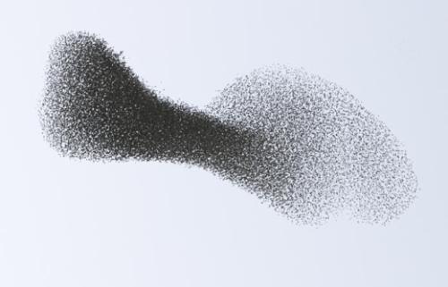 swarm500