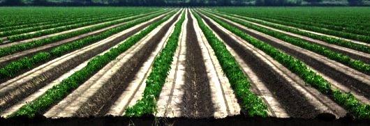 Rows in a Field