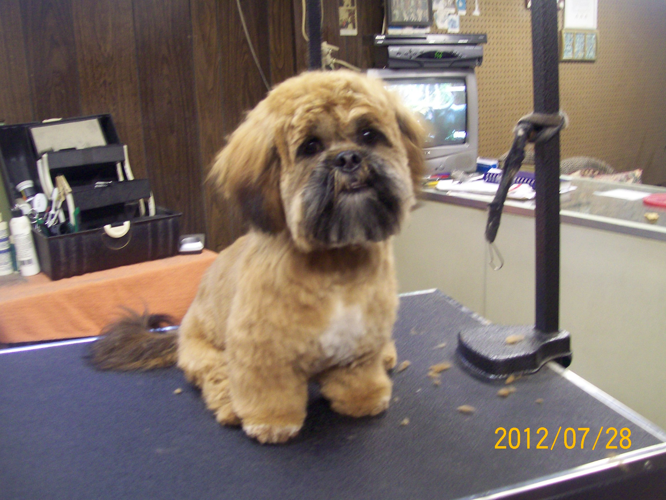 Image For Bich Poo Bichon Poodle Mix Fluff Dry Grooming Salon