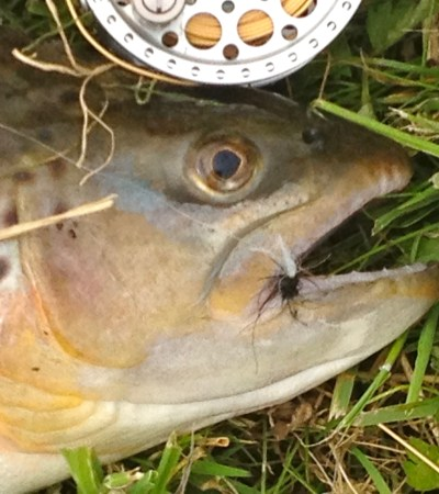Fishing the dry fly on a English chalk stream