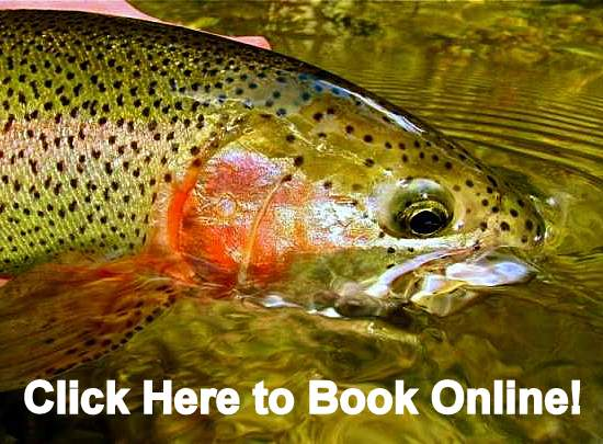 Guided Fly Fishing in the Great Smoky Mountains in Tennessee and North Carolina Gatlinburg Pigeon Forge Cherokee Bryson City