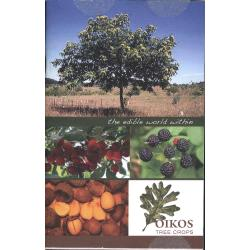 Small Crop Of Oikos Tree Crops
