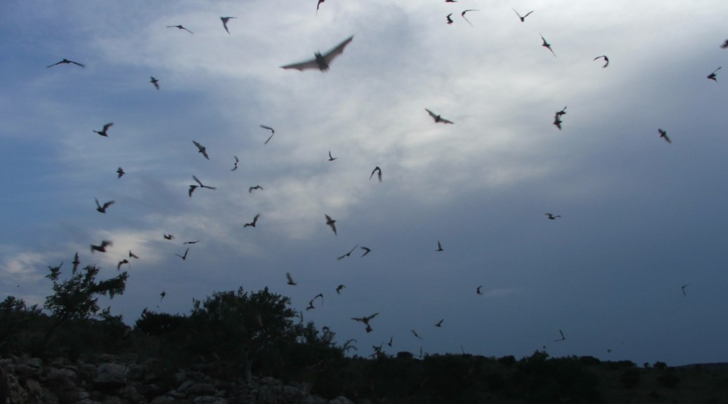 Free-tailed_bats