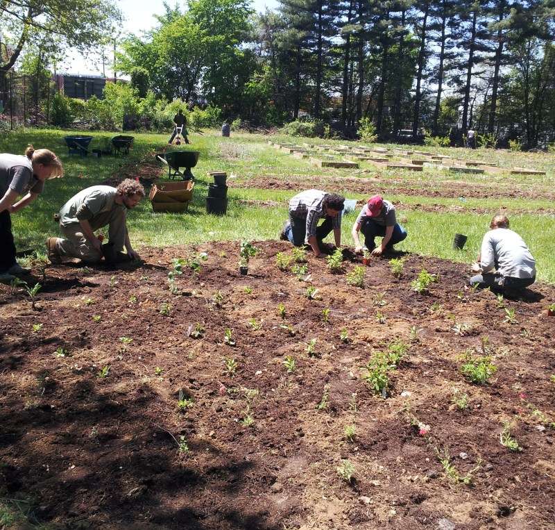 Planting at Light House