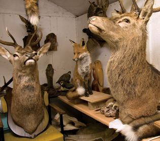 Taxidermy Foam Supplies Inc