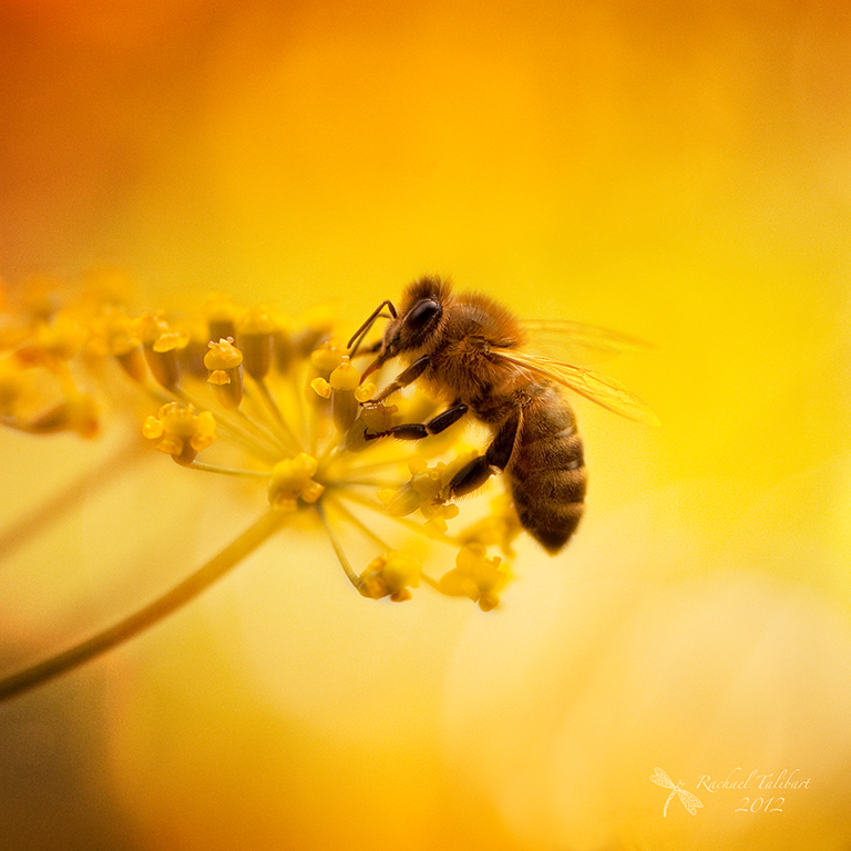 Cute Bees Wallpaper Summer And The Honey Bee Focused Moments