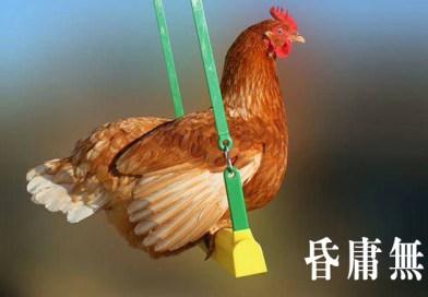 2015년 올해의 사자성어 – 혼용무도(昏庸無道) 뜻.