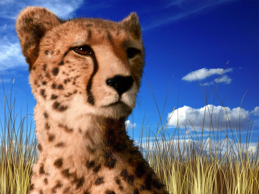 Cat In Fall Wallpaper Cheetah Facts And Pictures