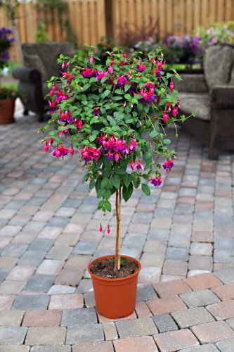 Exterieur Fuschia Foliera - Old World Quality, New Age Technology