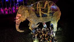 Elefante Salomão