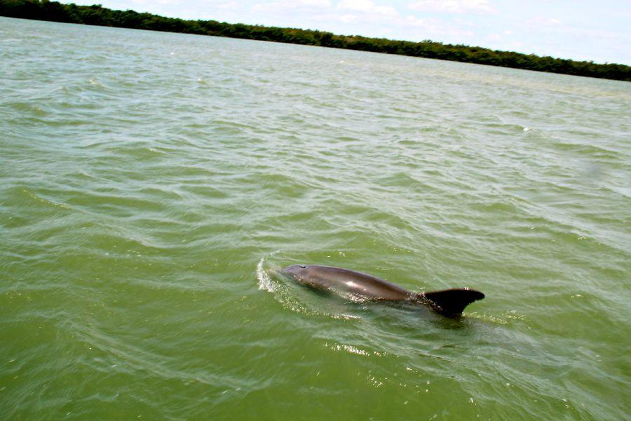 Wo gibt es Delfine? - weltweit Delfine beobachten