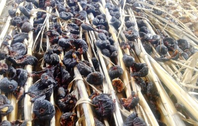 Drying figs