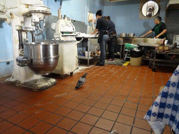 kitchen-tortilla-making-pigeon