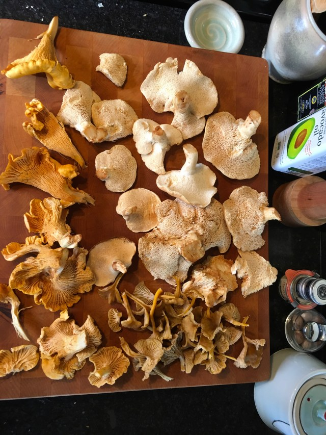 My haul of golden chanterelles, hedgehogs, and angel wings