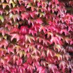 leaves-november
