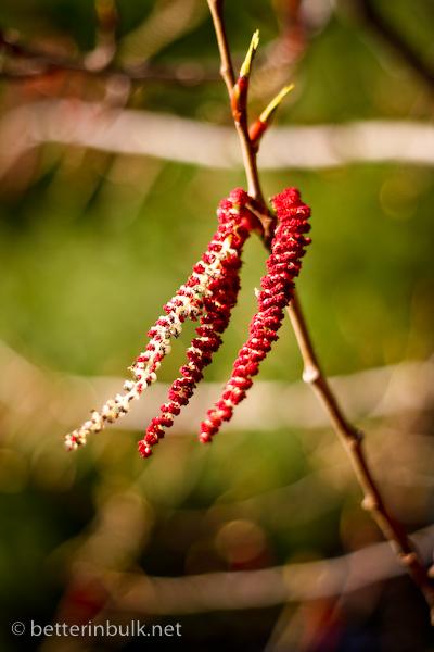 Tree blossom bokeh