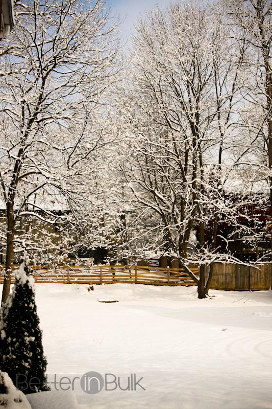 snow-1-3