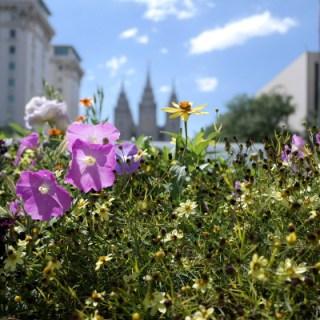 Salt Lake City Temple Square #WW