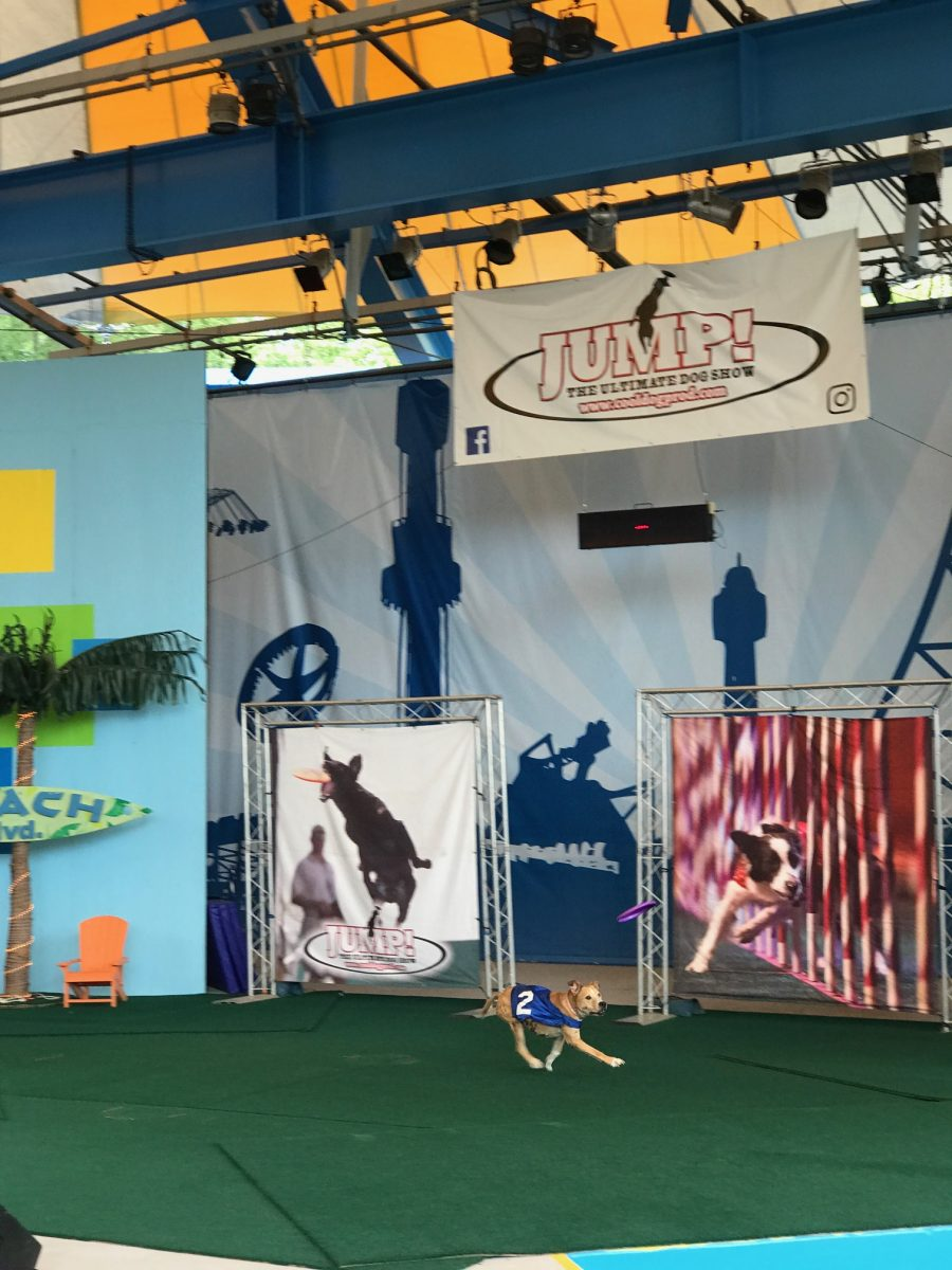 Jump: The Ultimate Dog Show at Kings Dominion