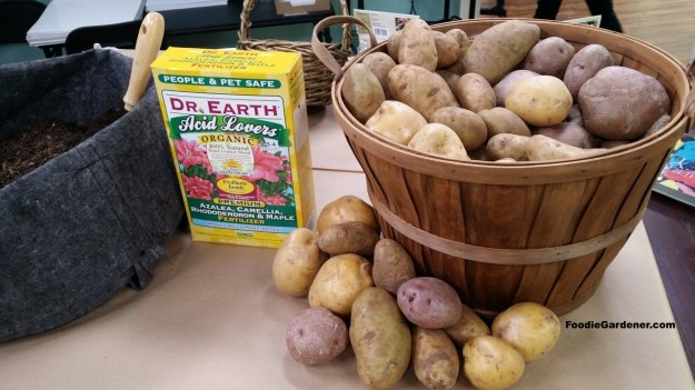 grow potatoes in grow bag organically foodie gardener