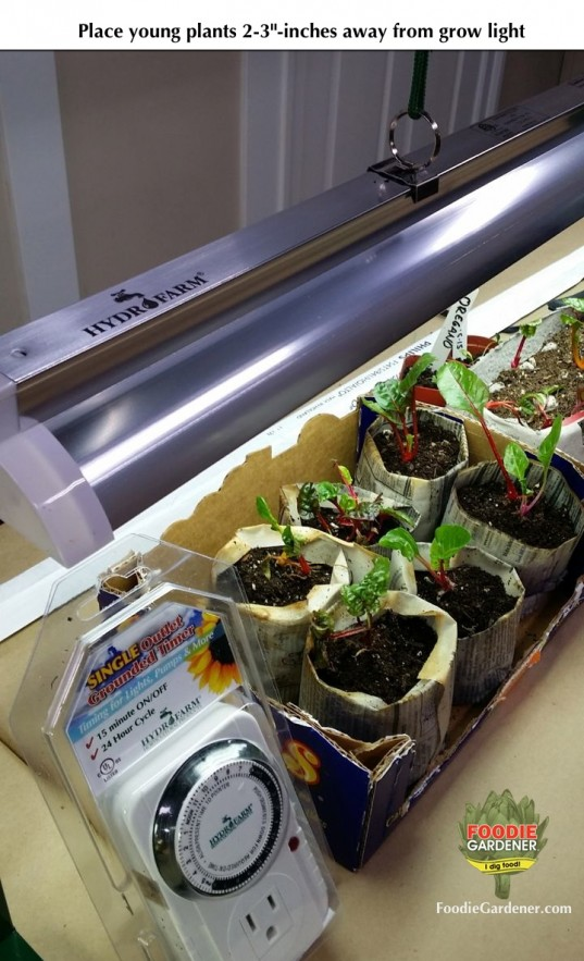 hydrofarm jump start grow light kit swiss chard light automatic timer foodie gardener blog
