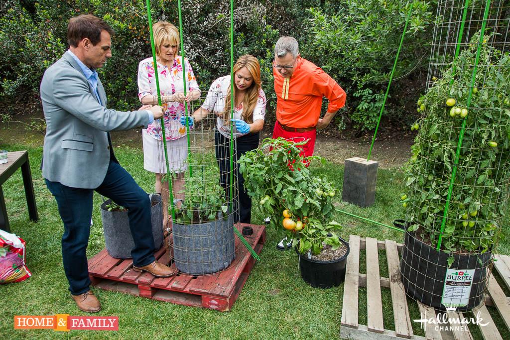 Tall Tomato Plant Garden Design Ideas