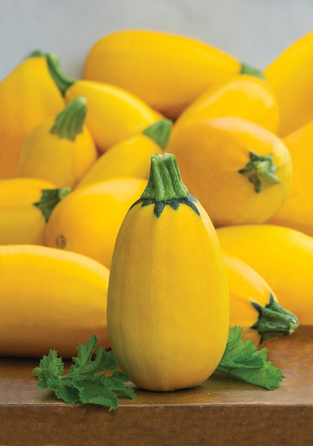 Summer Squash 'Golden Egg Hybrid' from Burpee seeds on Foodie Gardener blog