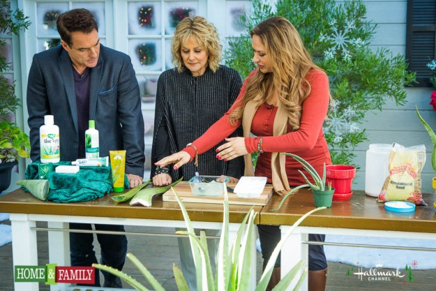 shirley-bovshow-foodie-gardener-how-to-grow-aloe-vera-extract-gel-home-and-family-show-hallmark