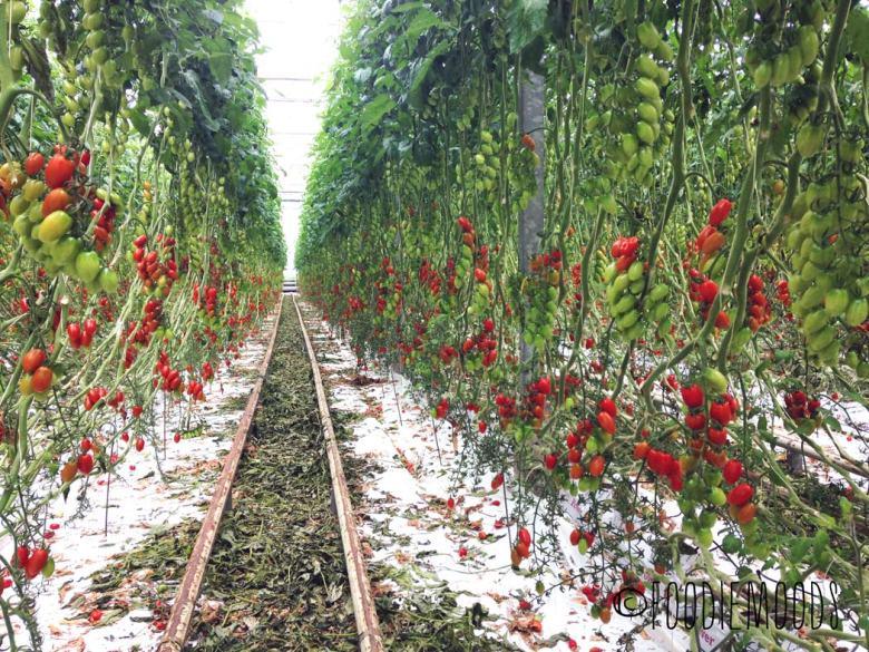 tomaten kwekerij osdorp miss foodie