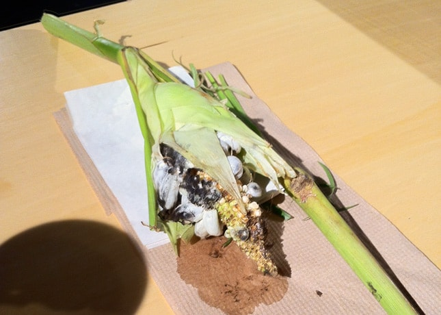 Huitlacoche, a fungi that grows on corn at the Omnivore Food Festival, Montreal / FoodNouveau.com